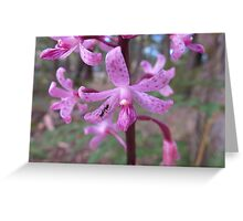 Australian Otways Orchid Greeting Card