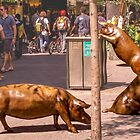 Pigs on the loose by indiafrank