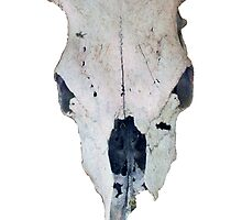 Arizona Cow Skull by DAdeSimone