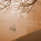 In the Misty Morning by Barbny