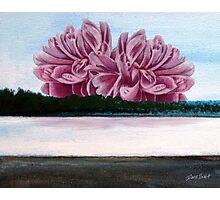Lake Peony Photographic Print