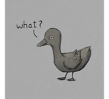 Questioning Duck Photographic Print