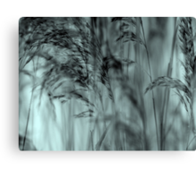 Whispering Reeds  - JUSTART © Canvas Print