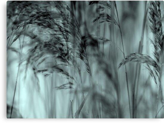 Whispering Reeds  - JUSTART © by JUSTART
