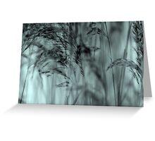 Whispering Reeds  - JUSTART © Greeting Card