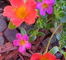 Colorful by Carolyn  Fletcher