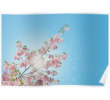 Spring Pink Flowers Poster