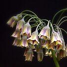 Fairy Bells by naturelover