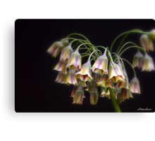 Fairy Bells Canvas Print