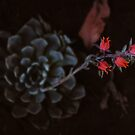 LA desert flower by Santamariaa