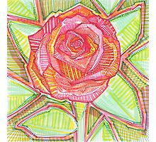 Rose drawing - 2016 Photographic Print
