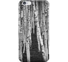 Silver Birch Trees iPhone Case/Skin