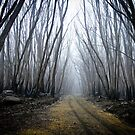 Wounded Woodland  by dansLesprit