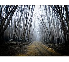Wounded Woodland  Photographic Print