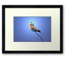Lilac-breasted Roller - Blue Bird Background from Africa Framed Print