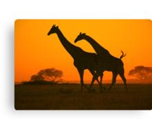Giraffe Golden Run - African Wildlife Background Canvas Print