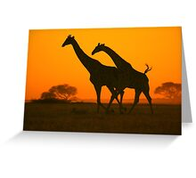 Giraffe Golden Run - African Wildlife Background Greeting Card