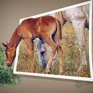 """Grass Is Always Greener"" by Melinda Stewart Page"