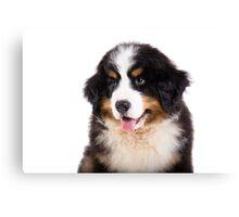Portrait of Bernese mountain dog puppy Canvas Print