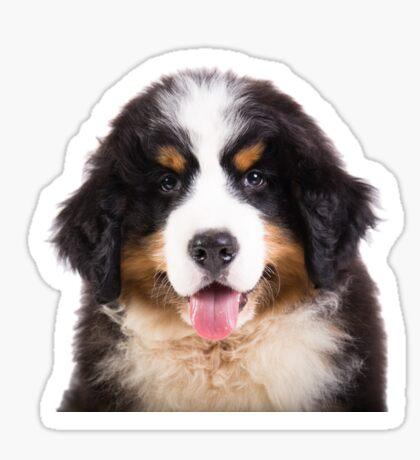 bernese mountain dog puppy Sticker