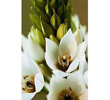 Beauty of the Tuberose Photographic Print