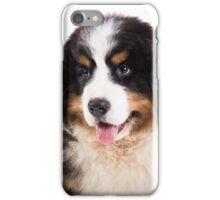 Portrait of Bernese mountain dog puppy iPhone Case/Skin