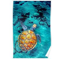 tortue Poster