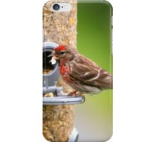 Hungry Lesser Redpoll iPhone Case/Skin