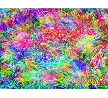 Rainbow Meadow Photographic Print