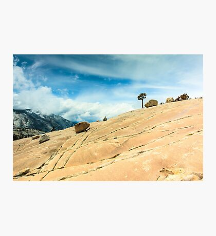 Lone Tree at Yosemite National Park Photographic Print