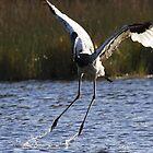 Flying Dance by byronbackyard