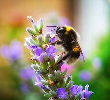 Humble Bumblebee by BonniePhantasm