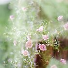 after the rain by Jessica  Lia