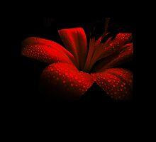 Ruby Duvet Covers by Vitta