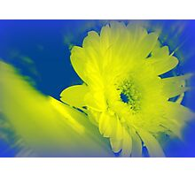 Gerbera - with a difference Photographic Print