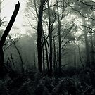Stand in the mist by athex