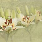 Lilies Sublime by Marilyn Cornwell