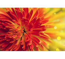 orange-red flower Photographic Print