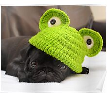 Pug in frog hat Poster