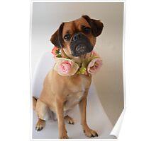Pug x Cavalier Dog with Flower Garland Poster