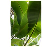Luscious Tropical Greens - Huge Leaves Patterns - Vertical View Upwards Right  Poster
