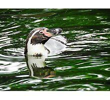 Penguin in emerald water Photographic Print