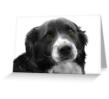 Border Collie and the Equal Time Message Greeting Card