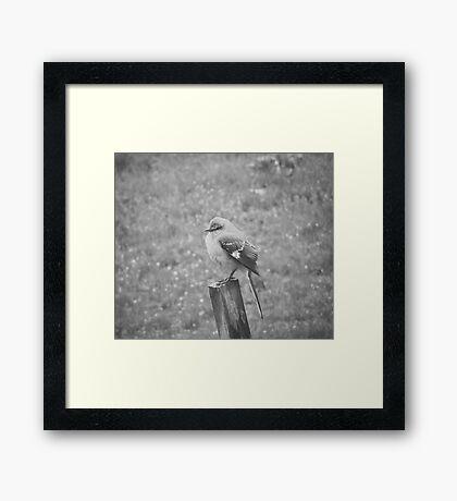 The Bird Black and White Framed Print