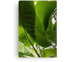 Luscious Tropical Greens – Huge Leaves Patterns – Vertical View Upwards Left Canvas Print