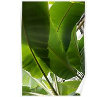 Luscious Tropical Greens – Huge Leaves Patterns – Vertical View Upwards Left Poster