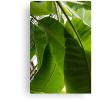 Luscious Tropical Greens - Huge Leaves Patterns - Vertical View Downward Right  Canvas Print