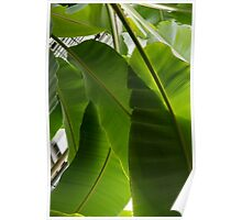 Luscious Tropical Greens - Huge Leaves Patterns - Vertical View Downward Right  Poster