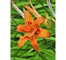 Lilly flower Photographic Print