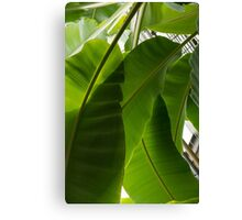 Luscious Tropical Greens - Huge Leaves Patterns - Vertical View Downward Left Canvas Print
